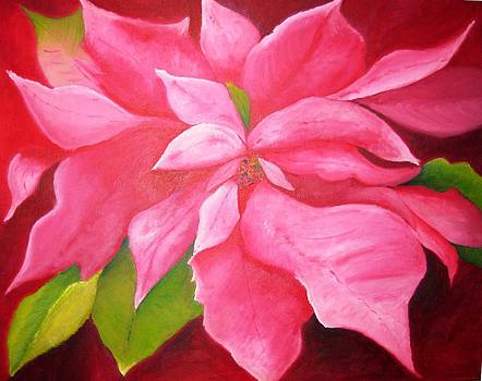 Pink Poinsettia by Rebecca Jackson