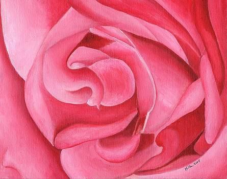 Pink Rose 14-1 by William Killen