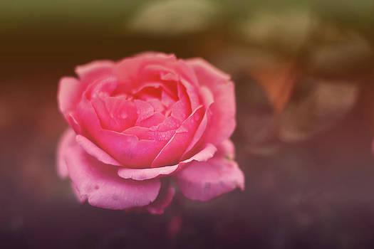 Pink Rose II by Nadeesha Jayamanne