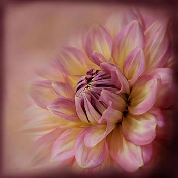 Pink Sensation  by Sally Bauer