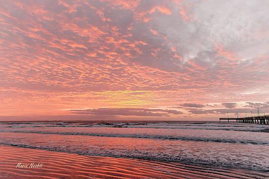 Pink skies by Maria Nesbit