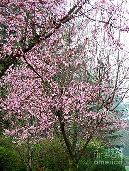 Pink Spring by Tanya  Searcy