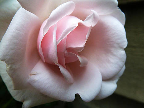 Pink by Tanya Jacobson-Smith