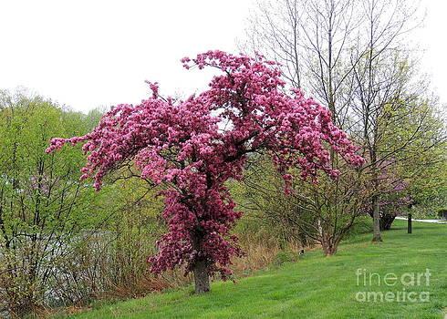 Pink Tree by Pamela Rivera
