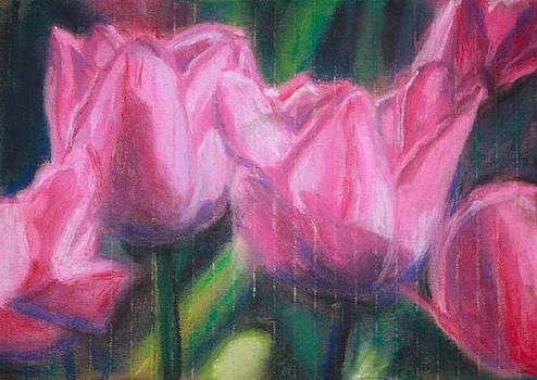 Pink Tulips by Sarah Vandenbusch