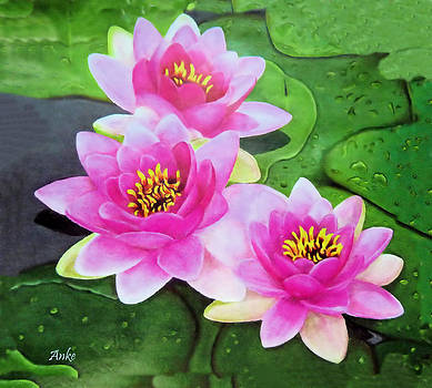 Pink Water Lilies by Anke Wheeler