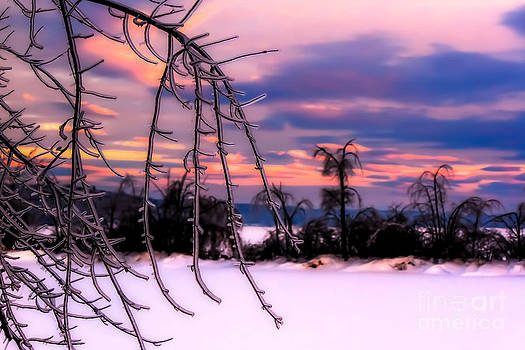 Brenda Giasson - Pink Winter Ice