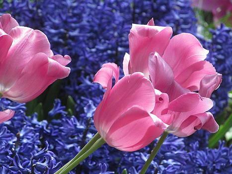 Alfred Ng - pinks and blues