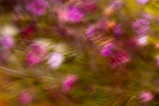 Pinks and Greens by Janice Sullivan