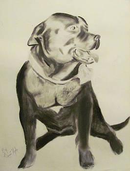 Pitbull by Gina Hyde