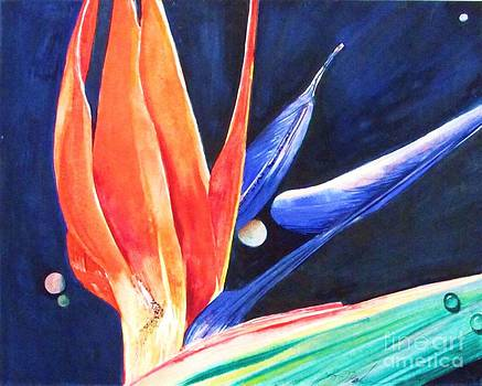 Planets and Dewdrops by Beth Fischer