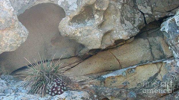 Plant In Stone by Matt James