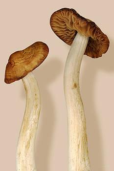 Mike Savad - Plant - Mushrooms - I