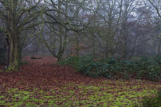 Plantation Leaves by Maj Seda