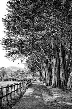 The Tree Lined Path by Christine Smart