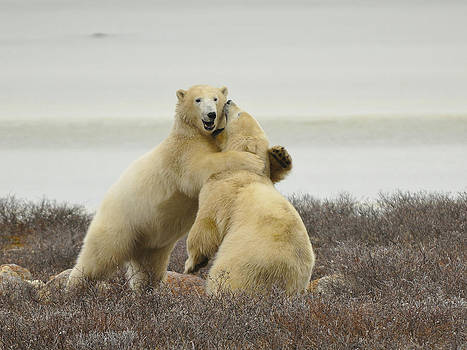 Play Time by David Marr