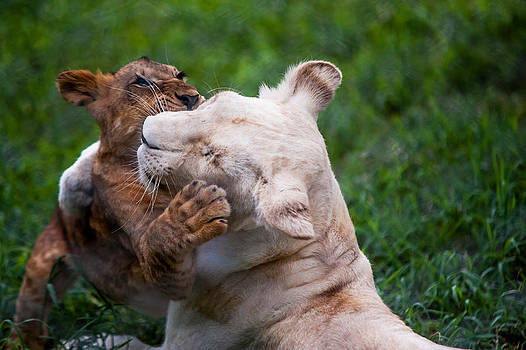Jenny Rainbow - Playful Kids. Two Lion Cubs