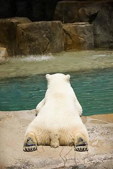 Adam Romanowicz - Playful Polar Bear
