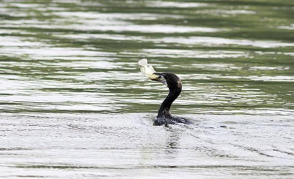 Ramabhadran Thirupattur - Pleading - let me go...