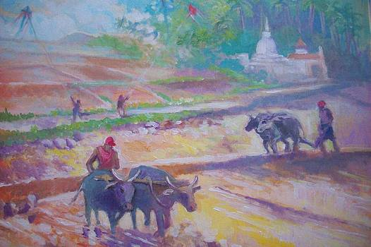 Ploughing Rice Fields  Sri Lanka by Paul Weerasekera