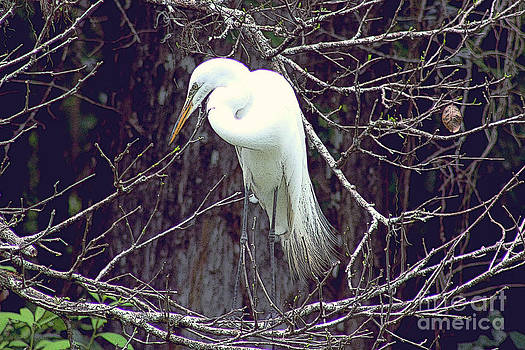 Plumage  by Rosemary Aubut
