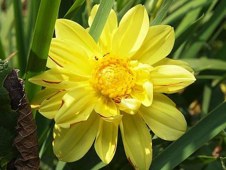 Pocketful of sunshine by Valeria Donaldson