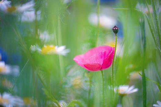 Poetic Dreams by Sarah-fiona  Helme