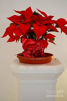 Mary Deal - Poinsettia on a Pedestal No 1