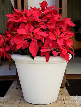 Mary Deal - Poinsettias in a Planter