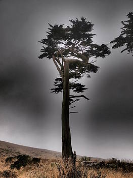 Point Reyes California by Henry Gray