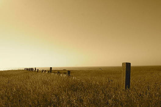 Point Reyes Field by Colleen Renshaw