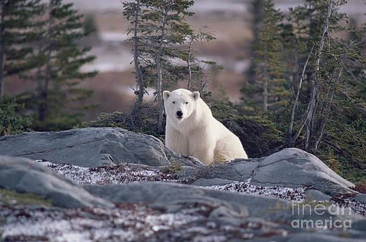 Bryan and Cherry Alexander - Polar Bear