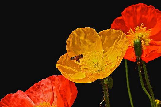 Byron Varvarigos - Pollen Patrol