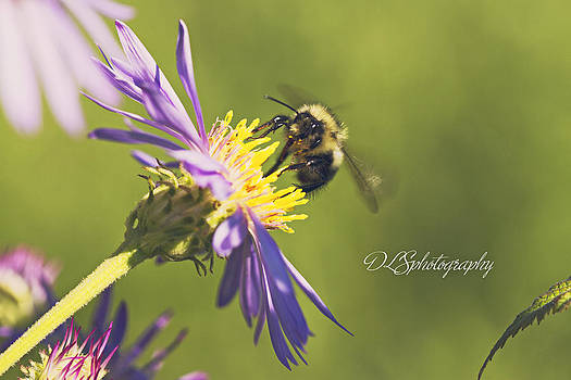 Pollination by Danielle Silveira