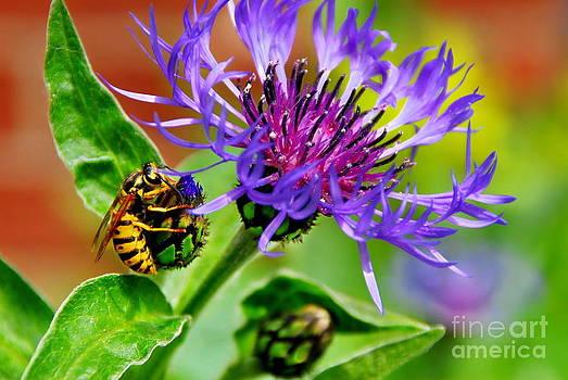 Pollinator by Andrea Kollo