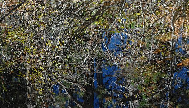 Donna Blackhall - Pollock