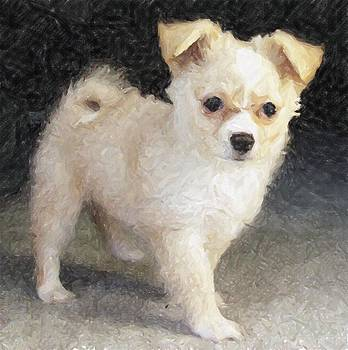 Pomchi Dog by Olde Time  Mercantile