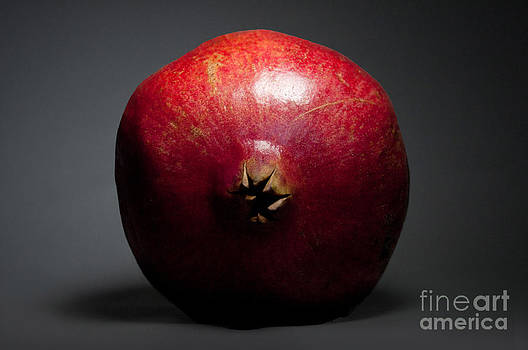 Pomegranate Portrait by Dan Holm