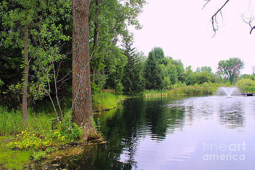 Corey Ford - Pond Fountain