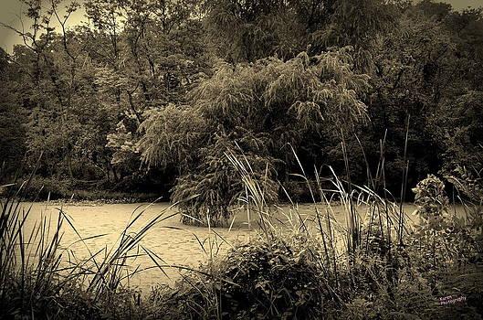 Pond by Karen Kersey