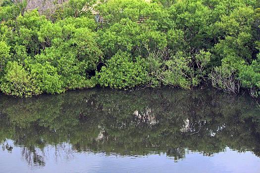 Pond Reflections by Carolyn Ricks