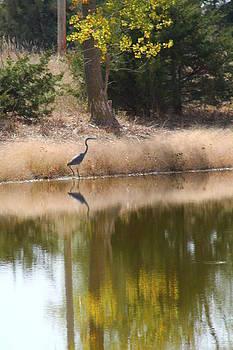 Pond Side by Alicia Knust