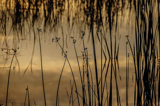 Pond Silhouette by Tingy Wende