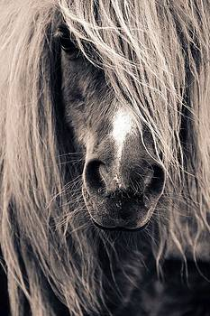 Pony Portrait by Anne Macdonald