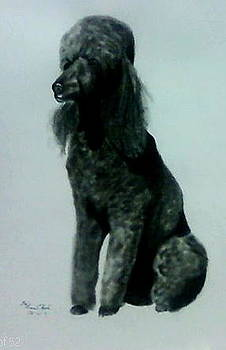 Poodle Potrait by Gina Hyde