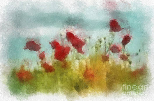 Poppies by Francis Leavey