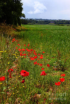 James Brunker - Poppies in Field in Rural England