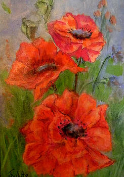 Poppies by Judie White