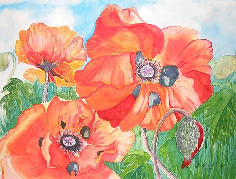 Poppies by Stephanie Zobrist