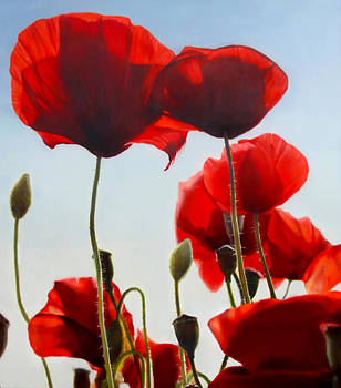 Poppies by Thomas Darnell
